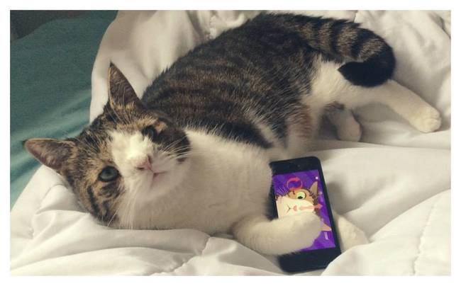 07-Monty-The-Cat-Phone