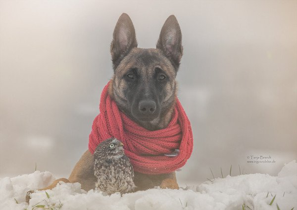 03-dog-and-owl