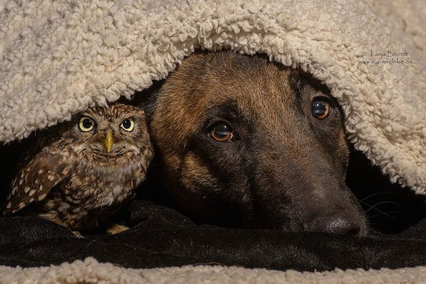 04-dog-and-owl