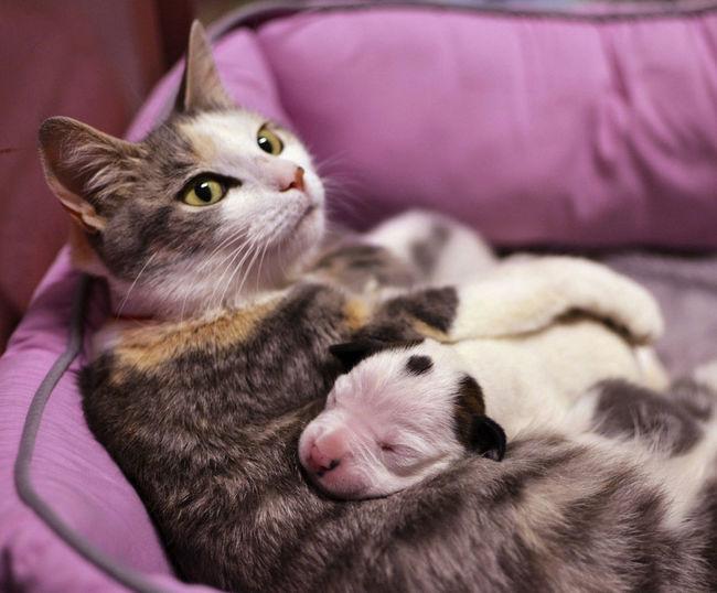 05-pitbull-cuddling