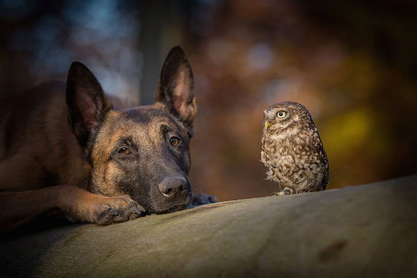06-dog-and-owl