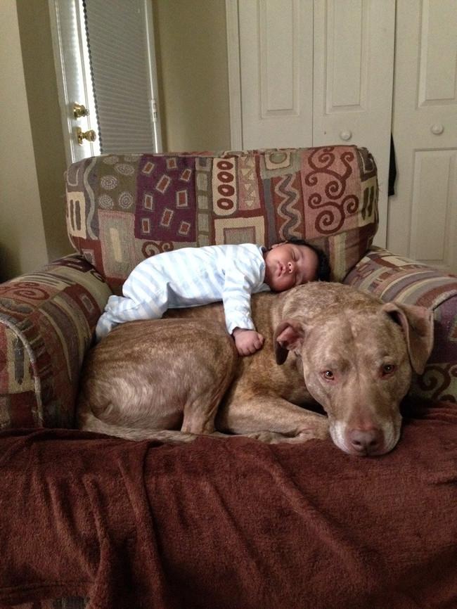 07-pitbull-cuddling