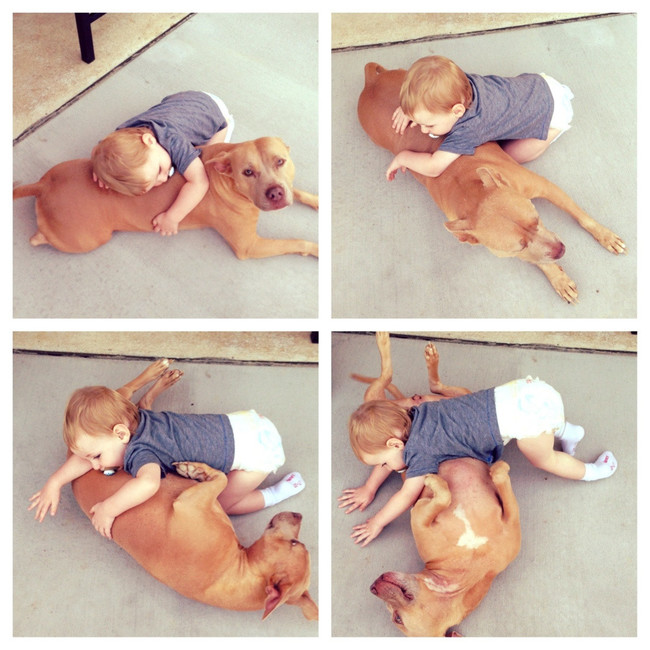 08-pitbull-cuddling