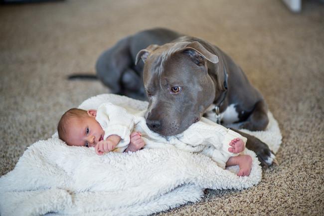 12-pitbull-cuddling