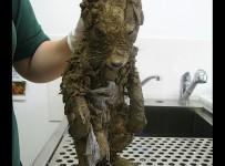 mud-baby