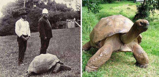 old-turtle-1