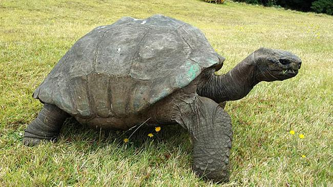 old-turtle-3