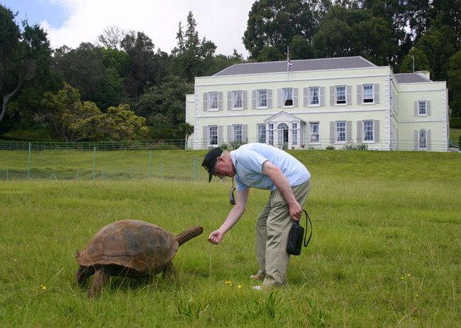 old-turtle-4