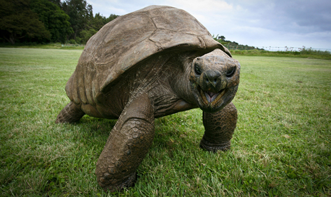 old-turtle-7