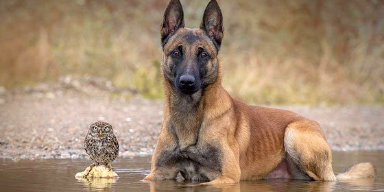 dog-owl-friends