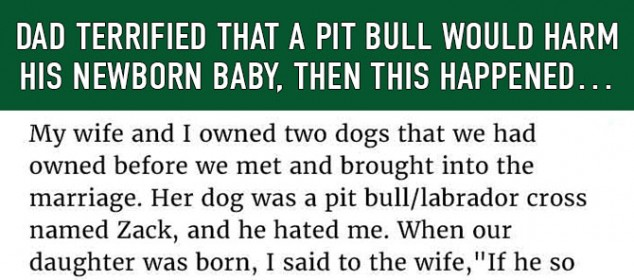 loving-pit-bull