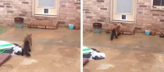 cat-door-fail