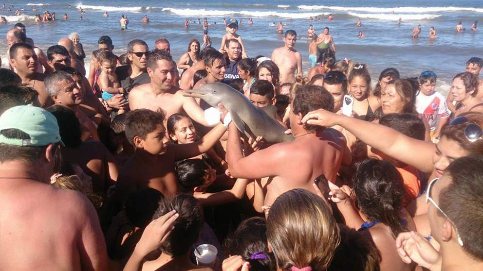 dolphin-die